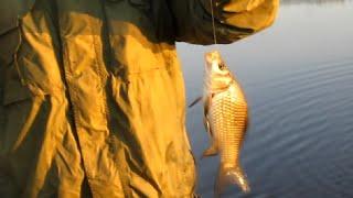 Рыбалка на реке доставила море удовольствия ЭЛЬДОРАДО карася отвели душу Достойный улов