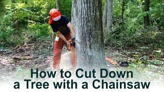 How I Cut Down a Tree with a Chainsaw