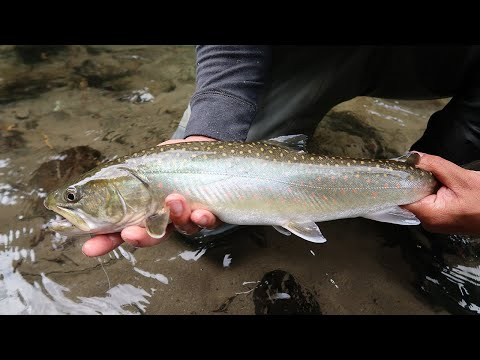 BC BULLTROUT AND RAINBOWS On The Spoon And Dry Fly!