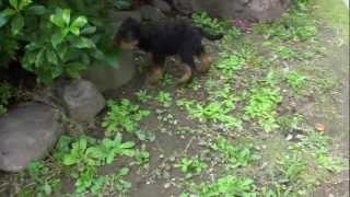 子犬が生まれていますよ http://www.woof.jp/at.html.