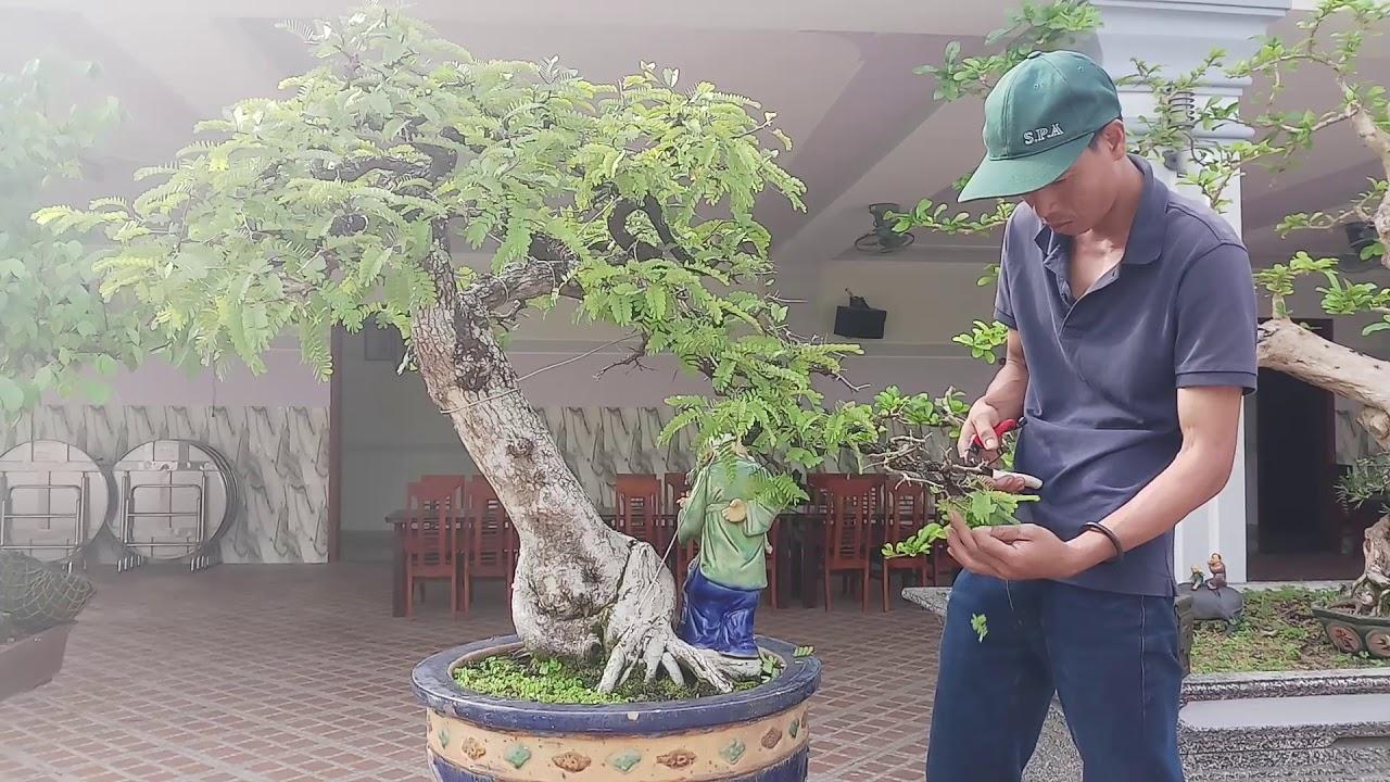 Bonsai Me Dang Văn Nhan Nghệ Thuật Chỉnh Sửa Cay Cảnh