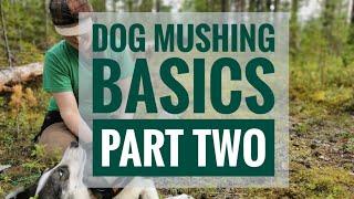 DOG MUSHING BASICS PART TWO: Teach your dog to run or bike
