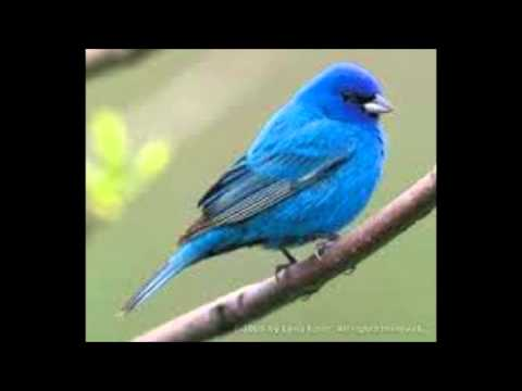 It's A Lovely blue bird