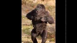 この曲は youtubeで お友達のアンディさんバーディさんの2011年春コラボ...