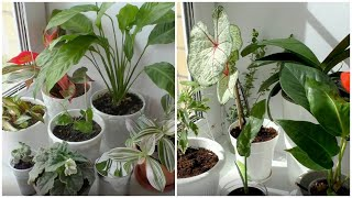 Мои комнатные растения сентябрь 2020 /House Plants September 2020/