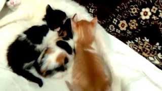 Видео о кошках. Котята подросли