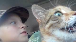 Везем кошку в машине