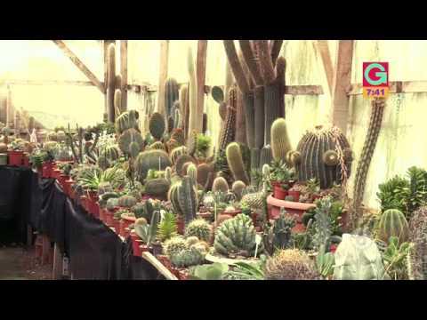 Una colección de más de mil cactus