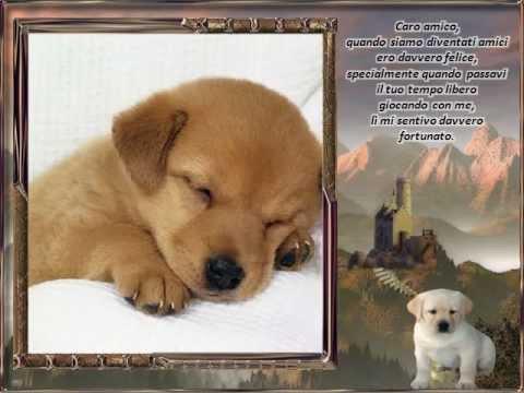 Caro amico lettera di un cane all 39 uomo youtube - Colorazione immagine di un cane ...