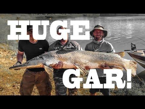 HUGE ALLIGATOR GAR: Trinity River, Texas - Northwoods Angling