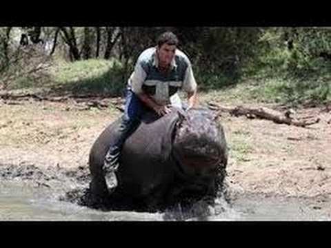 Hippopotamus  nature's wild feast Documentary