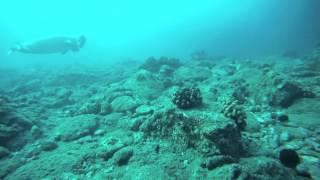 Hawaiian Monk Seal - AKA Kaiwi