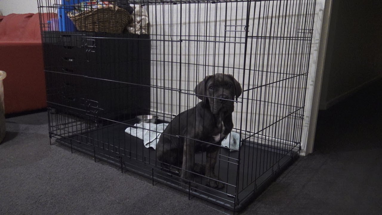 Stop Puppy Cry At Night In Crate Day 15 Fully Trained Youtube