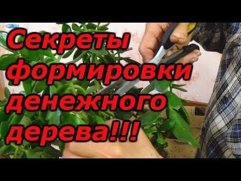 ДЕНЕЖНОЕ ДЕРЕВО-КАК КРАСИВО