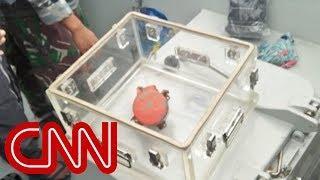 Divers find crashed Lion Air's cockpit voice recorder
