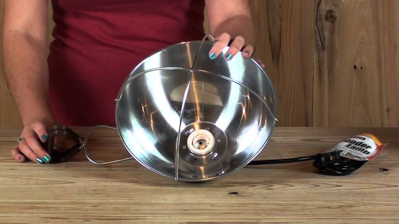 Heat Lamp Brooder - YouTube