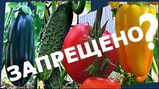 видео Что можно выращивать в теплице
