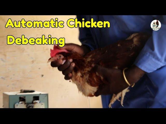 Automatic Chicken Debeaking