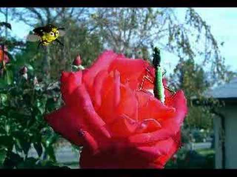 Funny Cartoon: Bee Bo Goes to Heaven