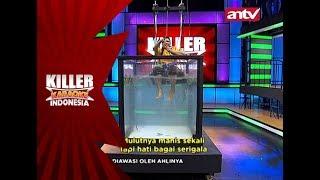 Hebat! Penampilan Catherine menghipnotis Melki – Killer Karaoke Indonesia