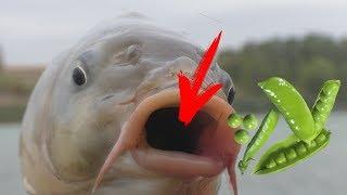 Рыбалка Ловля карпа летом на зеленый горошек Часть 1