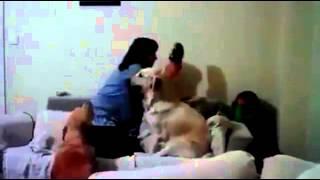 Собака защищает ребенка, когда его мать делает вид, что ударит(, 2014-04-16T04:57:09.000Z)