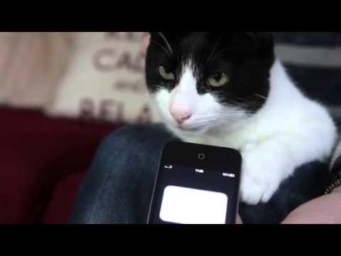 Британский кот побил рекорд по громкости мурчания и попал в Книгу рекордов Гиннесса