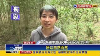 蓮華池研究中心收回民墾地 紅茶樹成林-民視新聞