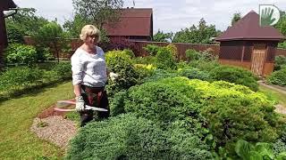 Видео журнал Сады в отличной форме 46 Обрезка и формирование хвойных и лиственных растений