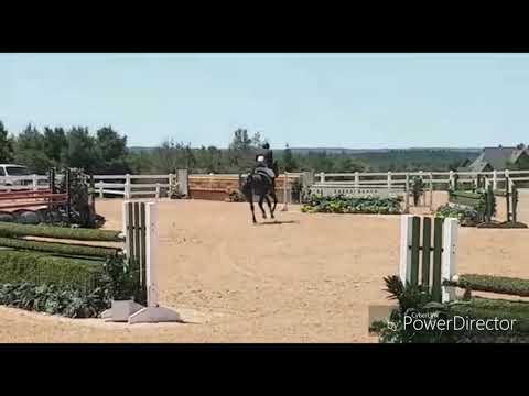 Stakkato Grande W 2012 stallion by Stakkato Gold  x Rio Grande