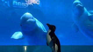 Penguins at Chicago Aquarium w…