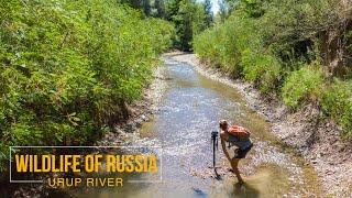 Дикая природа России - река Уруп