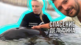 Спасение дельфина / Гурзуф / Купи духи! / 18.05.19