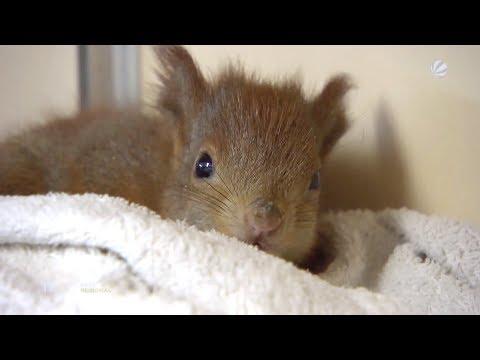 Wenn falsch verstandene Tierliebe mehr schadet als hilft