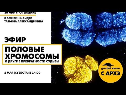 Детский эфир «Половые хромосомы и другие превратности судьбы» в рамках рубрики «30 минут о генетике»