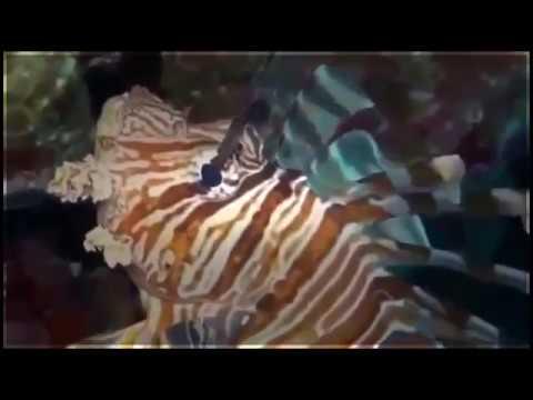 Ocean Documentary Channel - Deep Ocean Coral Reef Adventure
