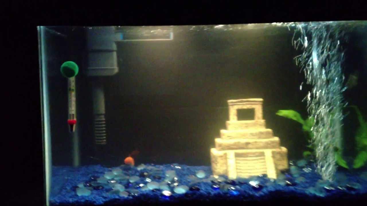 5 gallon fish tank quiet 30 fish tanks aquariums for 10 gallon fish tank for sale