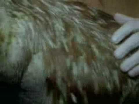 με άνθρακα που χρονολογείται τριχωτό μαμούθ Μιννεάπολις σεξ τοποθεσίες