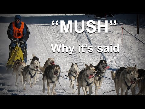 Why Do They Say 'Mush' to Make Sled Dogs Go