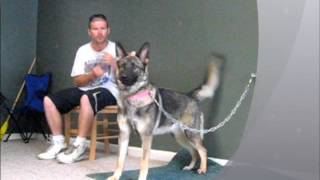 Ohio Protection Training - German Shepherd Home Guard