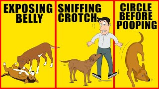 10 Odd Dog Behaviors and What They Actually Mean