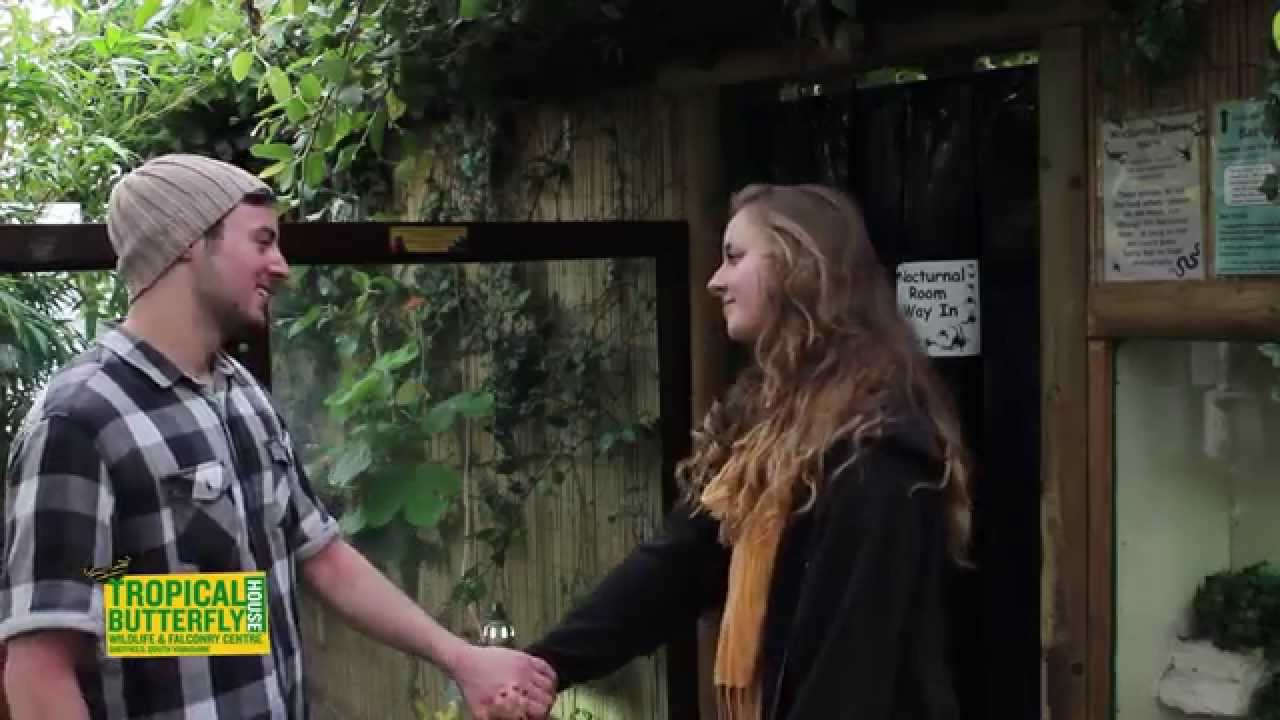 fall in love with the tropical butterfly house sheffield - youtube