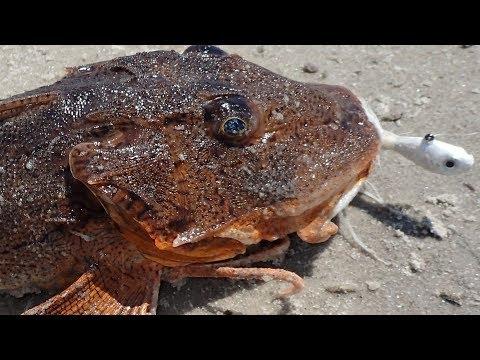 Trash Fish To Trophy! - Doormat Fluke On Searobin Bait