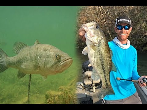 How To Bed Fish for Spawning Largemouth & Spotted Bass | Field Trips North Carolina