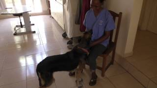 """""""Blacky"""" - Back to her owners -  A happy day(?)"""