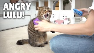 LuLu Got Revenge on the Hair Brushes! | Kittisaurus