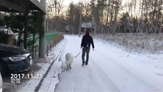 今年最初の雪が降りました。ルンルンは寒そうにしていますが、アランは...