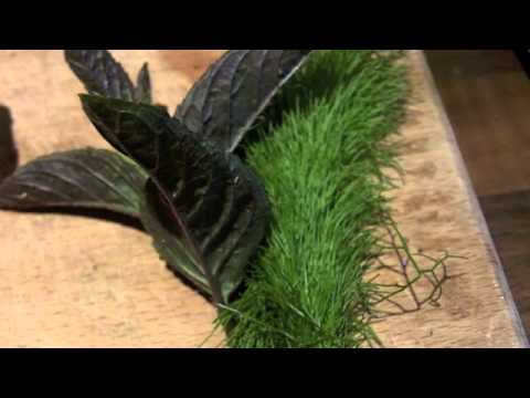 Pine pollen, Noni, Goji super lemonade tutorial.