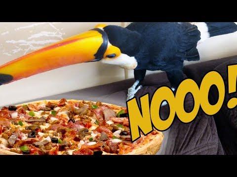 Toucan DESPERATELY Wants Pizza! (HILARIOUS!)