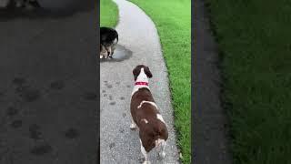 Bryer Dog Alfie   PBC SC Dog Park2 IMG 6764